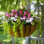 50 Awesome DIY Hanging Plants Ideas For Modern Backyard Garden (38)
