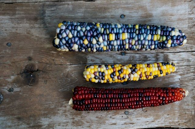Best diy indian corn decorations