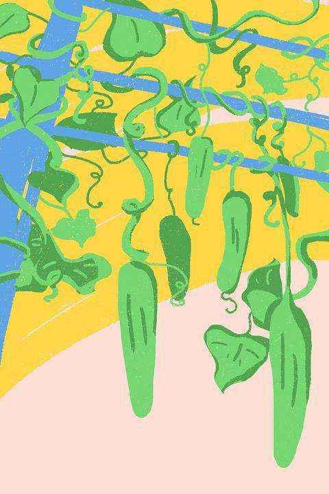 how-to-grow-cucumber-1-1525285317 | Как правильно выращивать огурцы