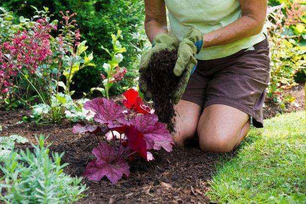 image3-49 | 6 советов начинающим садоводам