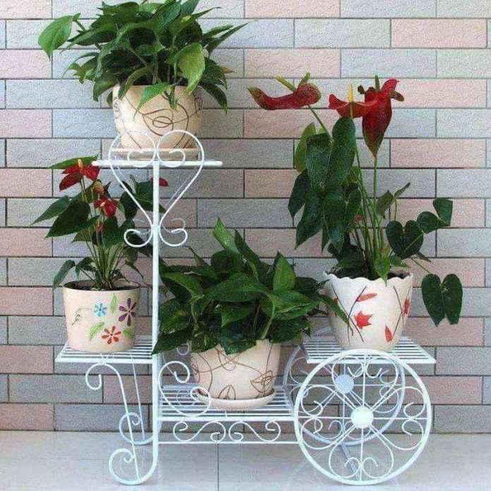 plantas-7   10 великолепных идей для украшения вашего дома растениями которые вам понравятся