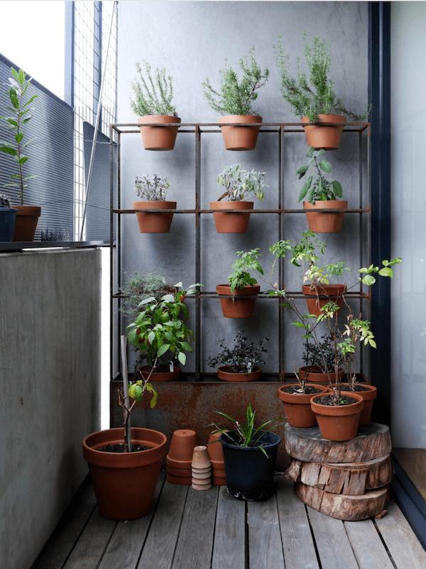 image4 | 7 растений которые необходимо вырастить в кухне
