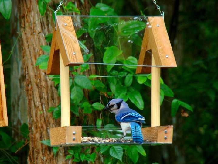image5-101   Креативные кормушки для птиц