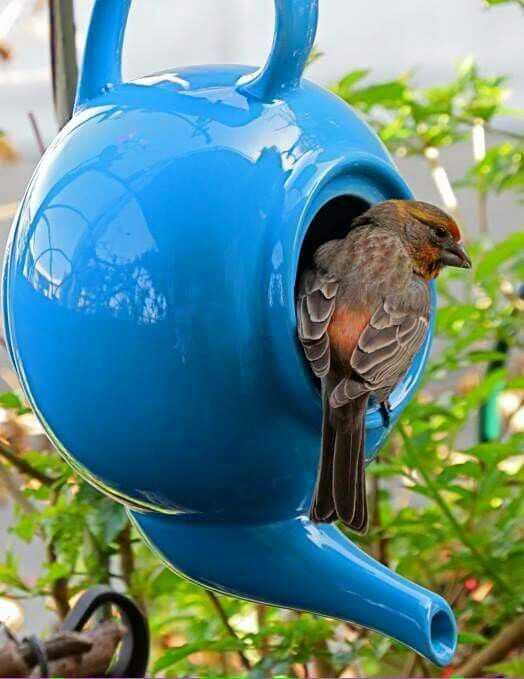 image8-23 | Удивительные домики для птиц которые можно сделать своими руками
