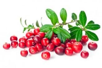 doppelherz-cranberry-botanik-ernte