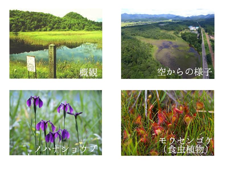 芝(しば)谷地(やち)湿原(しつげん)植物(しょくぶつ)群落(ぐんらく)