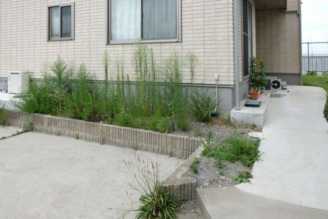 花壇に雑草が伸び放題の様子
