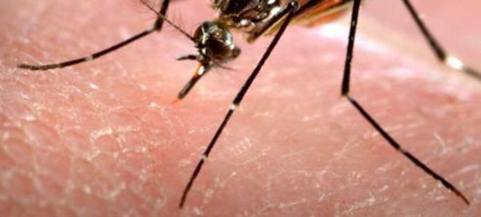 dso-uyardi-zika-virusu