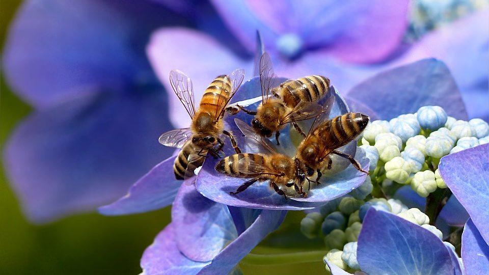 3000 Ft kedvezmény a méhek világnapja alkalmából