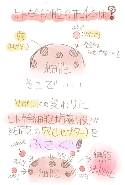 ヒト幹細胞の正体.jpg