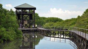 Ekowisata Mangrove Wanasari