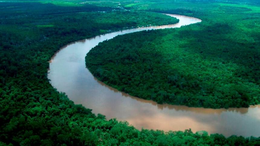 Hutan Kalimantan Hutan Kalimantan - Dolan Dolen