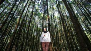 Hutan Pinus Imogiri Hutan Pinus Imogiri - Dolan Dolen
