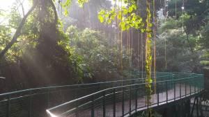 Babakan Siliwangi Bandung Hutan Kota Babakan Siliwangi by Ari Andrian Dolaners - Dolan Dolen