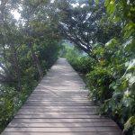 Wonorejo Mangrove Ecotourism wonorejo mangrove ecotourism via umihabibah - Dolan Dolen