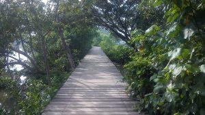 wonorejo mangrove ecotourism, hutan bakau, butan mangrove, surabaya, dolan dolen, dolaners wonorejo mangrove ecotourism via umihabibah - Dolan Dolen