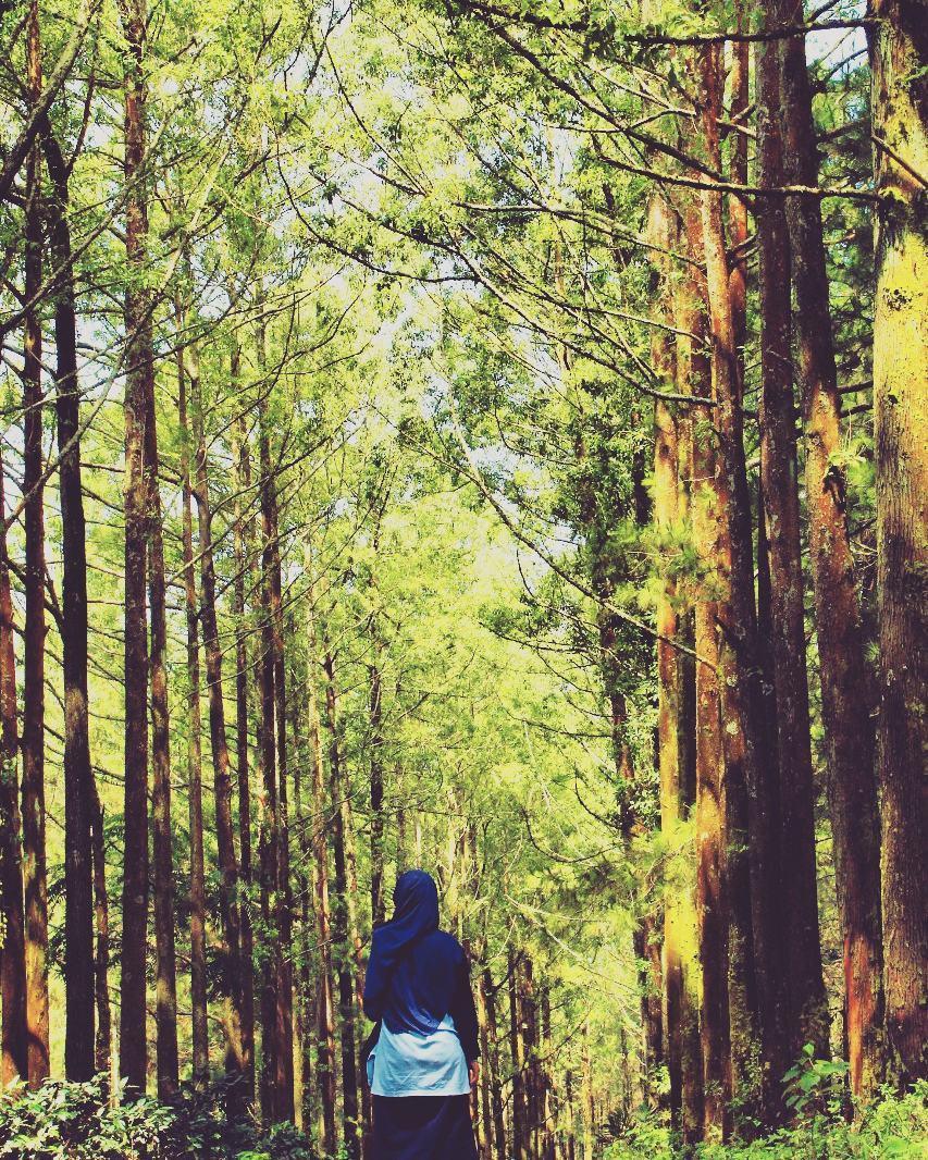 Hutan Pinus Budug Asu Malang, Malang, Kota Malang, Dolan Dolen, Dolaners Hutan Pinus Budug Asu via julee brarian - Dolan Dolen