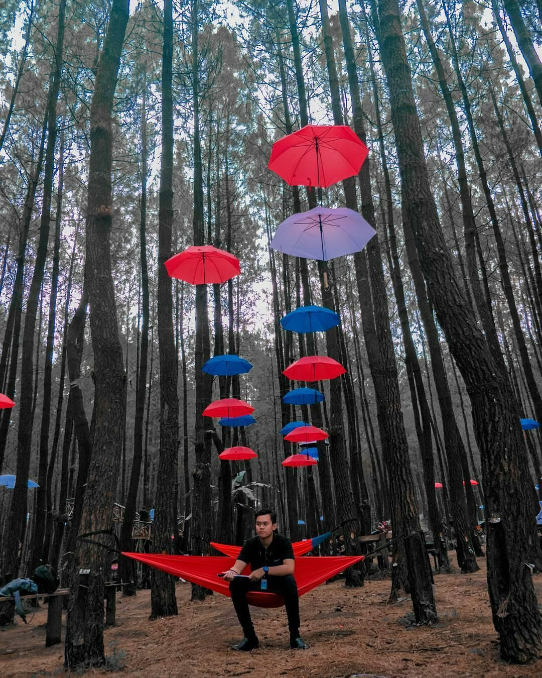 Hutan Pinus Semeru Malang, Malang, Malang Raya, Dolan Dolen, Dolaners Hutan Pinus Semeru by banganam78910 - Dolan Dolen