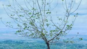 Hutan Pinus Asri via harki_nanda