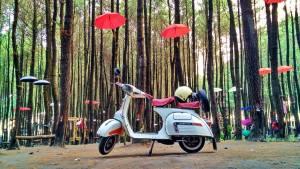 Hutan Pinus Semeru, Hutan Pinus Semeru Malang, Malang, Kabupaten Malang, Dolan Dolen, Dolaners