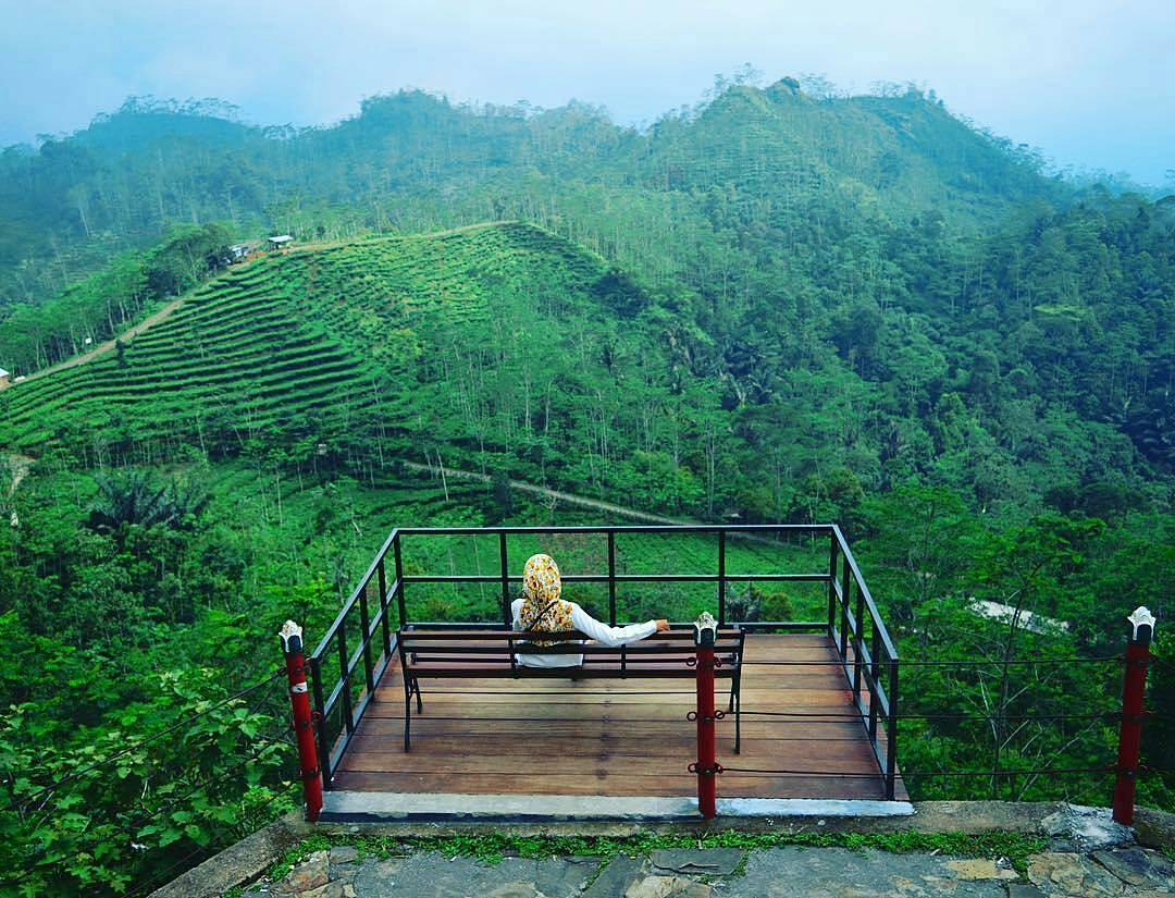 Kebun Teh Nglinggo, Kebun Teh Nglinggo Yogyakarta, Yogyakarta, Dolan Dolen, Dolaners Kebun Teh Nglinggo by wahyu sa - Dolan Dolen