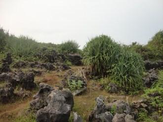pelabuhan pantai gesing gunungkidul (114)