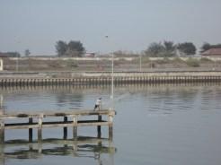 pelabuhan tanjung adikarto kulonprogo (156)