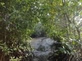 ekowisata mangrove baros kretek bantul (59)