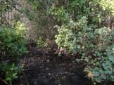 ekowisata mangrove baros kretek bantul (60)