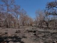 taman nasional baluran banyuwangi, afrika-nya pulau jawa (16)