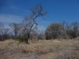 taman nasional baluran banyuwangi, afrika-nya pulau jawa (28)