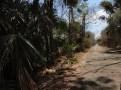 taman nasional baluran banyuwangi, afrika-nya pulau jawa (46)