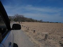 taman nasional baluran banyuwangi, afrika-nya pulau jawa (60)