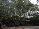 pantai bama, spot menarik lain di taman nasional baluran banyuwangi (17)