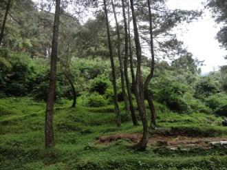 curug nangka taman nasional gunung halimun salak bogor (17)