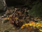 curug nangka taman nasional gunung halimun salak bogor (60)