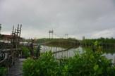 wisata hutan mangrove pantai jembatan api api kulonprogo yogyakarta (27)