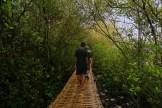 wisata hutan mangrove pantai jembatan api api kulonprogo yogyakarta (50)