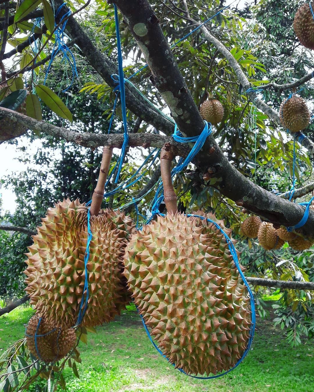 9 Tempat Wisata Keluarga dan Anak di Bogor 22