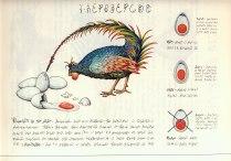 polloser