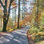 Road in Coed y Brenin
