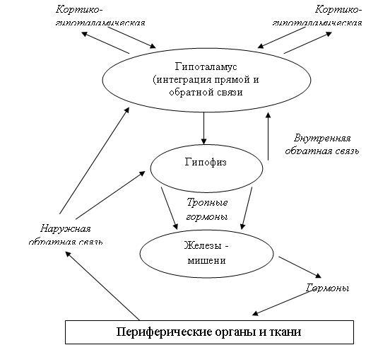 Общая схема регуляции нейроэндокринной системы