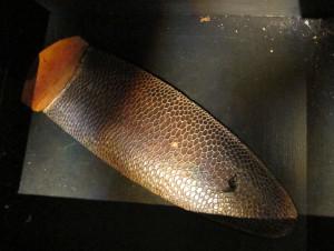 Beaver tail on exhibit in Jamtli museum, Sweden. Photo by D. Jørgensen.