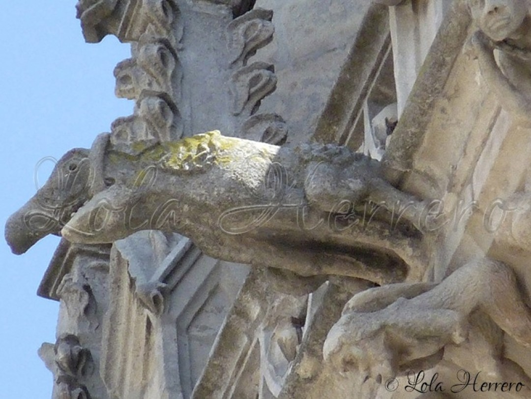 Gárgola Catedral Burgos (264)