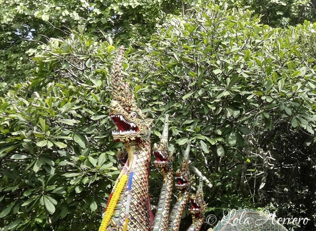 Doi Suthep Temple Chiang Mai (Tailandia) 202