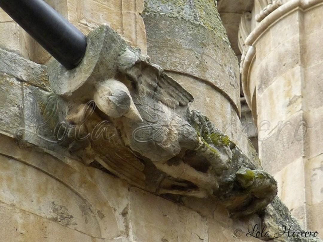 Gárgola Catedral Salamanca (315)