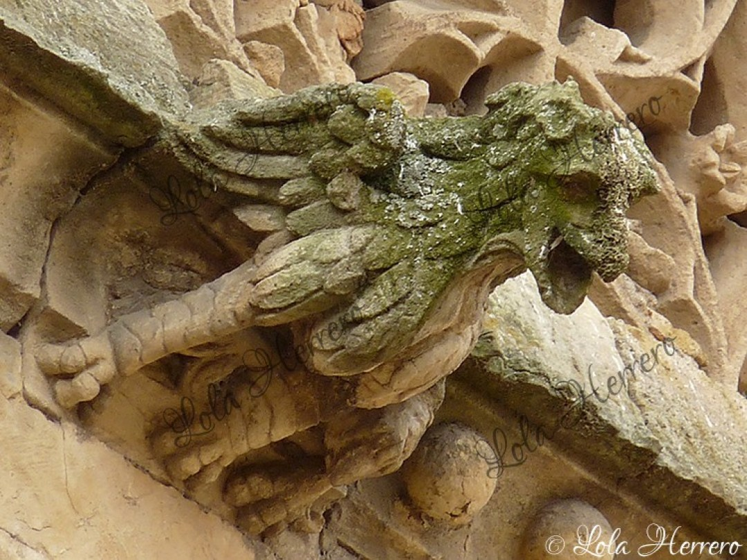 Gárgola Convento Úrsulas (Salamanca) (439)