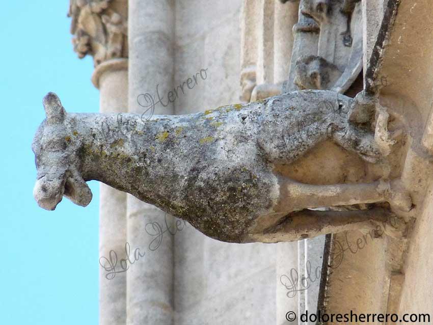 Animales insólitos en las imágenes de gárgolas I