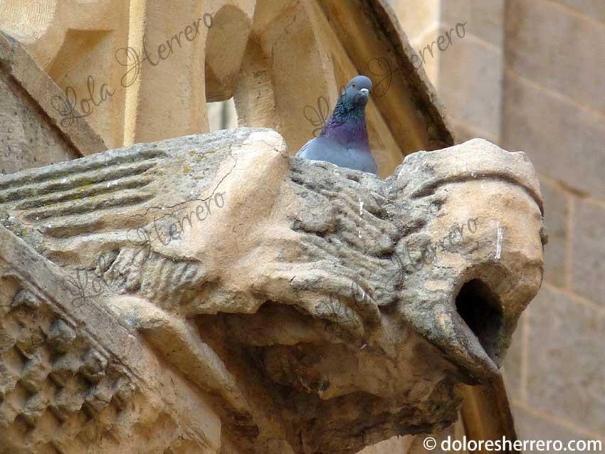gárgolas catedral gótico