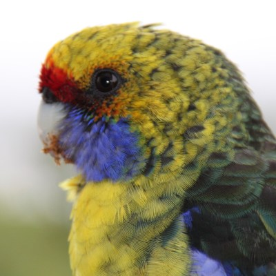 Our parrots are beautiful